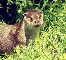 loutre- leyre - rivieres sauvages