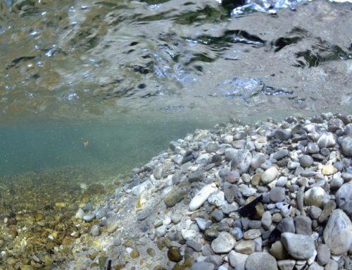 Deuxième réunion annuelle du Réseau des Rivières Sauvages